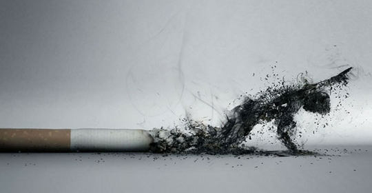 fumo.png